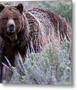 Mama Grizzly Metal Print