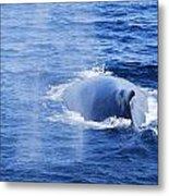 Mama Whale Metal Print