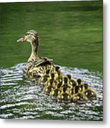 Mamas Peeps Are Not In A Row Metal Print