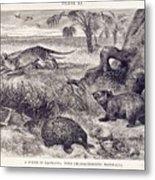 Mammals Of Tasmania Metal Print
