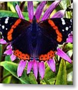 Mammoth Butterfly Metal Print