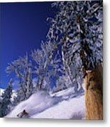 Man Skiing Through Trees In Fresh Metal Print