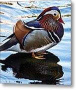 Mandarin Duck Metal Print by Robert Bales