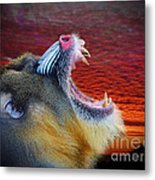 Mandrill Roaring At The End Of A Day  Metal Print