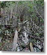Mangrove 001 Metal Print