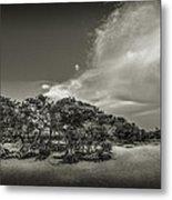 Mangrove At Low Tide Metal Print
