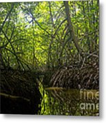 mangrove forest in Costa Rica 1 Metal Print