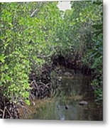 Mangrove Forest Metal Print by Tony Murtagh