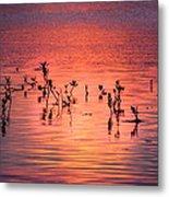 Mangrove Paradise Metal Print