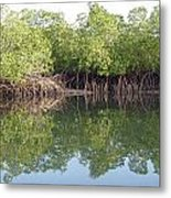 Mangrove Refelections Metal Print
