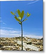 Mangrove Seedling On A Beach Metal Print