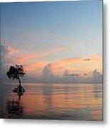 Mangrove Tree In Water At Sunrise Metal Print