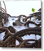Mangrove Tree Roots Detail Metal Print