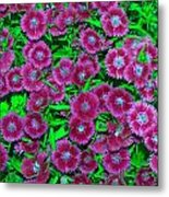 Many Blooms Metal Print