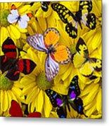 Many Butterflies On Mums Metal Print