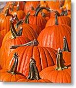 Many Pumpkins In A Row Art Prints Metal Print