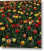 Many Tulips Metal Print