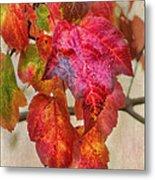 Maple Colors Metal Print