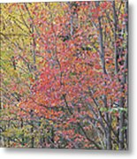 Maple Corner Foliage Metal Print