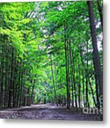 Maple Forest Metal Print