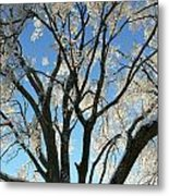 Maple Glazed  Metal Print