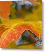Maple Leaf Edges In Autumn Metal Print