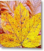 Maple Leaf In Fall Metal Print