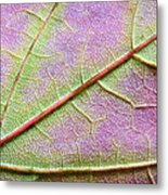Maple Leaf Macro Metal Print