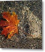 Maple Leaf - Playful Sunlight Patterns Metal Print