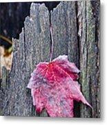 Maple Leaf - Uw Arboretum - Madison Metal Print