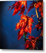 Maple Leaves Shadows Metal Print