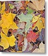 Maple Leaves Metal Print