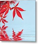 Maple Reflection Metal Print