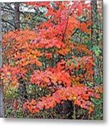 Maple Rush In The Fall Metal Print