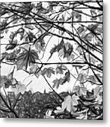 Maple Sunset - Paint Bw Metal Print