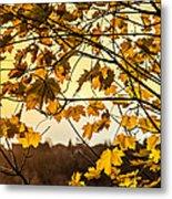 Maple Sunset Metal Print