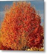 Maple Tree Metal Print