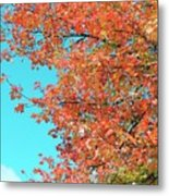 Maple Tree In Autumn Metal Print