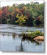Maple Tree On A Rocky Island Metal Print