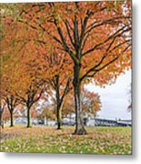 Maple Trees In Portland Downtown Park In Fall Metal Print