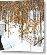 Maple Woods Metal Print