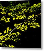 Maples Against Black Metal Print