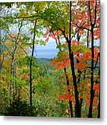 Maples Against Lake Superior - Tettegouche State Park Metal Print