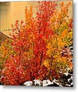 Maples Along The Palisades Metal Print