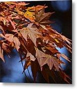 Maples In Spring 2013 Metal Print