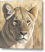 Mara Lioness Metal Print