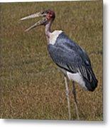 Marabou Stork   #0176 Metal Print