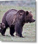 Marching Mama Grizzly And Cub  Metal Print