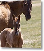 Mare And Foal   #0659 Metal Print