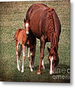 Mare With Foal Metal Print